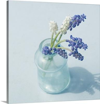 Little Bouquet Grape Hyachinth
