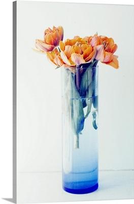 Orange Tulips in a Blue Vase