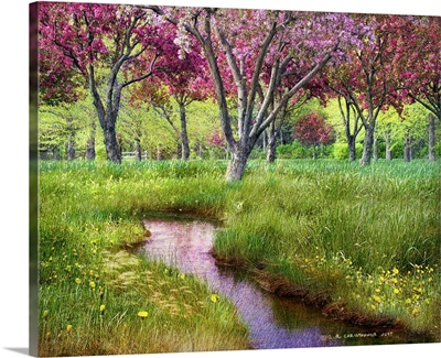 Orchard Spring