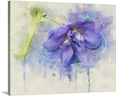 Painted Petals I