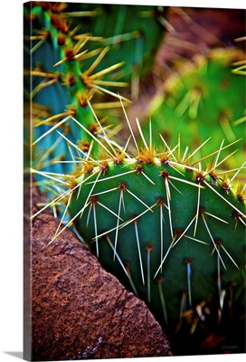 Prickly Passion