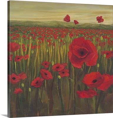 Red Poppy Sunrise