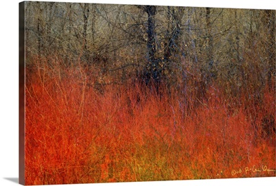 Red Willow