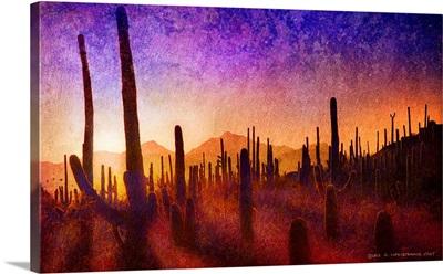 Saguaro Shadows