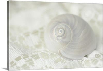 Seashell on Lace