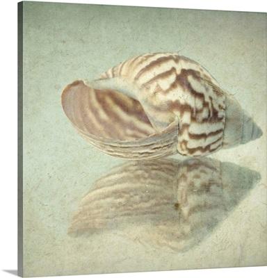 Seashell Reflection