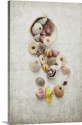 Seashell Still-Life