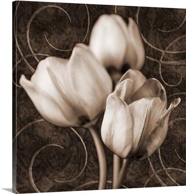 Sepia Tulip