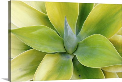 Spring Succulent Symphony VI
