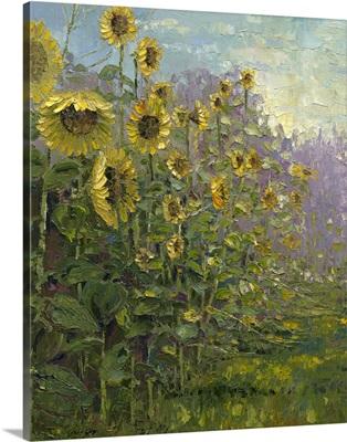 Sunflowers Sunrise