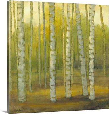 Sunny Birch Grove