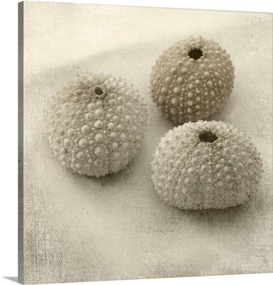 Three Sea Anemones