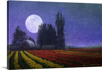 Tulips Moonlight