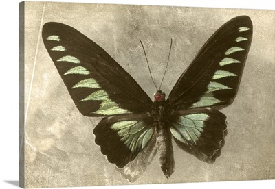 Vintage Butterfly A