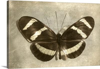 Vintage Butterfly B