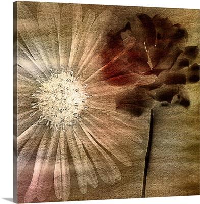 Vintage Poppy I