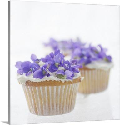Violet Cupcake A