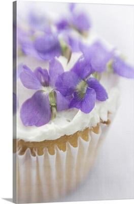 Violet Cupcake C