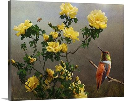 Yellow Roses Hummer