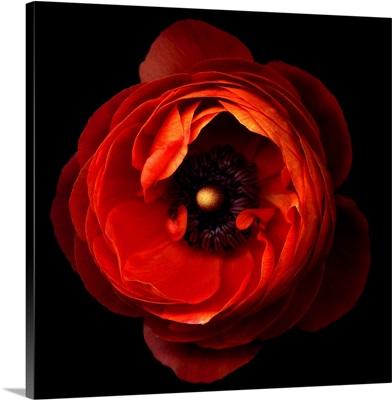 A flowerwork orange