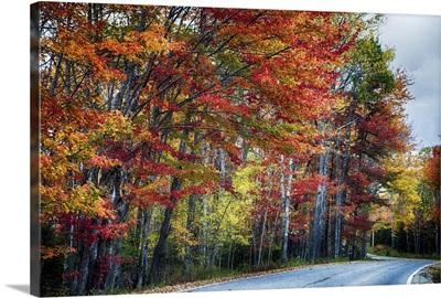 Acadia Fall Scenic