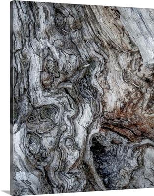 Ancient Bark