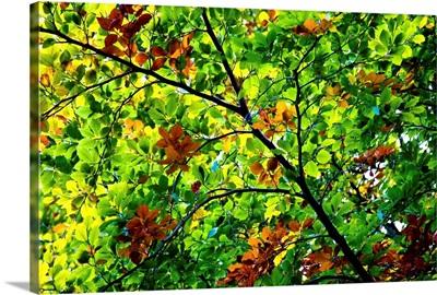 Autumns Beginning