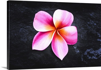 Awakening Flower