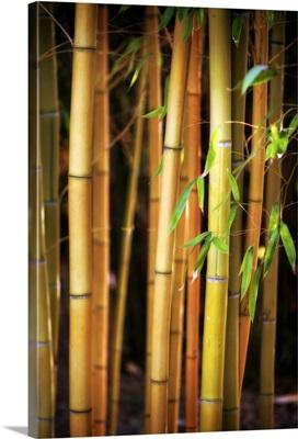 Bamboo Tribe