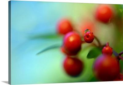Berries Drop