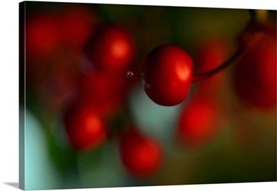 Berries Drop II