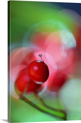 Berries Drop III
