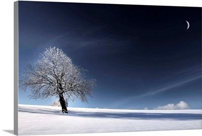 Blue Like Snow