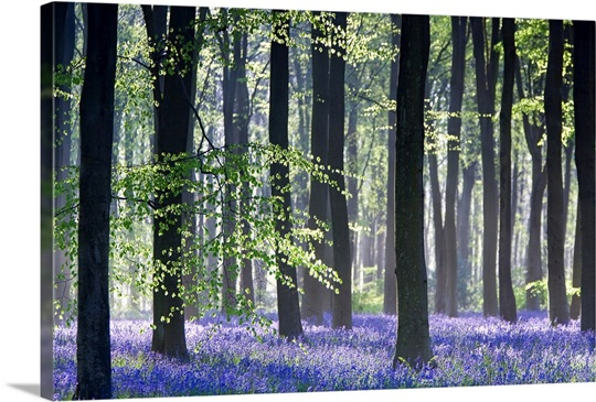 Bluebell vision canvas