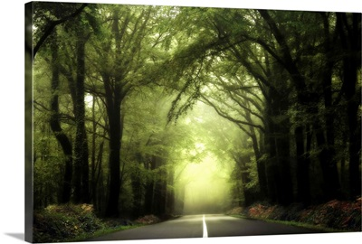 Broceliand Forest Road