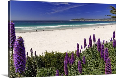 Carmel Beach Wildflowers