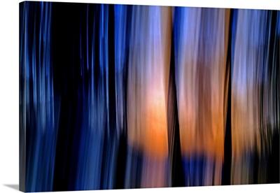 Cedar Sundown