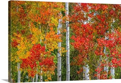 Colorado Autumn