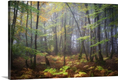 Colored Rain in Deep Forest