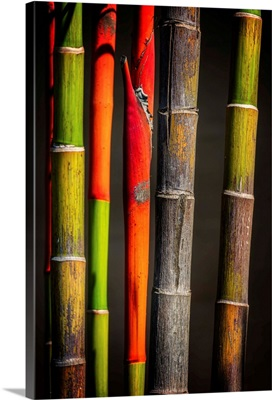 Colors Bamboos