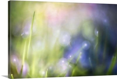 Colourful Dew