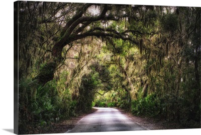 Country Road with Tree Canopy