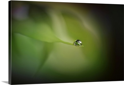 Drop Me In The Green