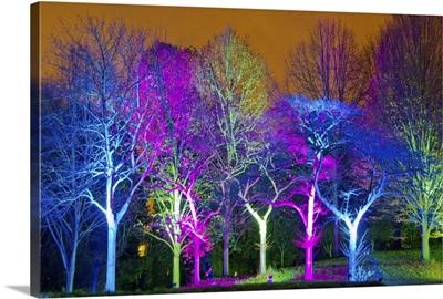 Enchanted Woods, Syon Park