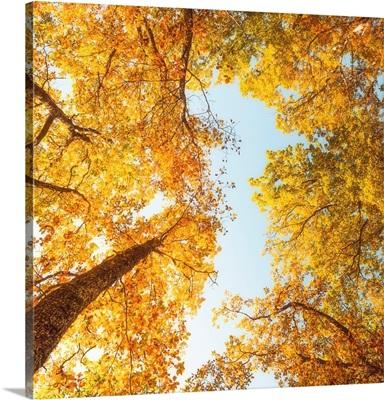 Fall In Height