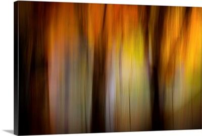 Fall Light I