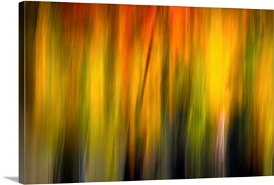 Fall Light II