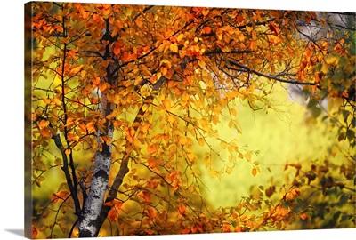 Fall Light III