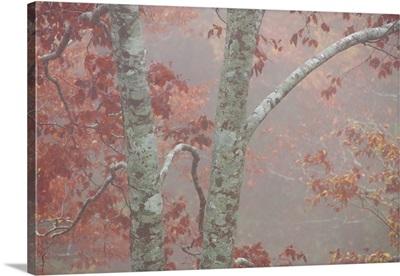 Fall's Fog I