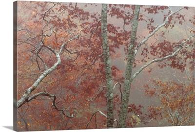 Fall's Fog II